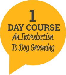 dog grooming courses cheshire